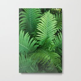 Fern Photography | Tropical Leaves | Nature | Jungle | Rainforest | Tropical | Minimalism Metal Print