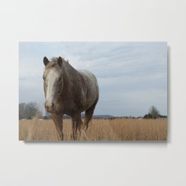 Happy Appy in the Pasture Metal Print