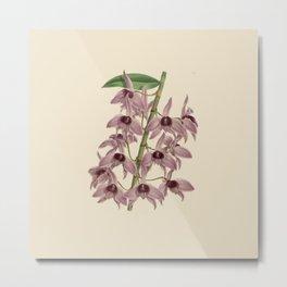 R. Warner & B.S. Williams - The Orchid Album - vol 01 - plate 042 Metal Print