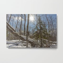 Winter Sunny Forest Scene Metal Print