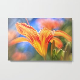 Orange Daylily with Soft Focus Metal Print