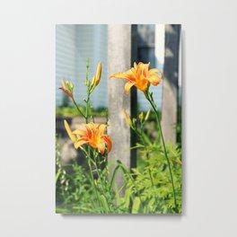 Growing Lilys Metal Print