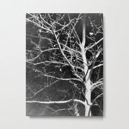 Evening tree Metal Print