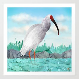 Crested Ibis - Splendid Japanese Tall Bird  Art Print