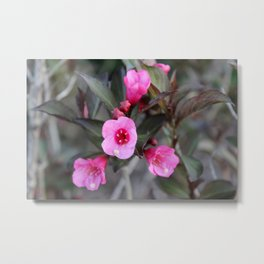 Pink Flowers on a Bush Metal Print