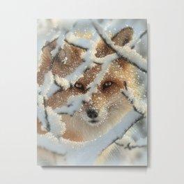 Red Fox - Hide and Seek Metal Print