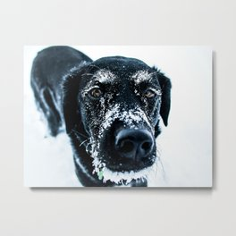 Snow Dog // Cross Country Skiing Black and White Animal Photography Winter Puppy Ice Fur Metal Print