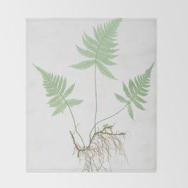Botanical Beech Fern Throw Blanket