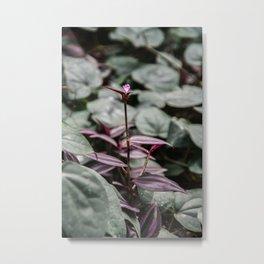 Tradescantia flower Metal Print
