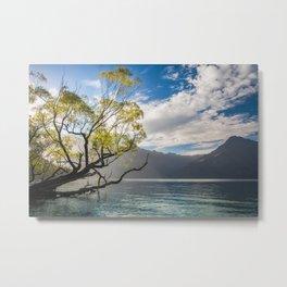 Beautiful Morning Light at Wilson Bay, New Zealand Metal Print