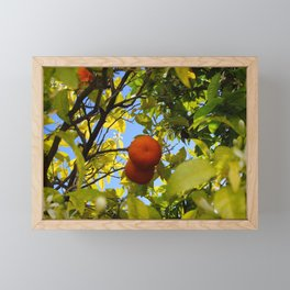 Two oranges in focus in the middle of the tree Framed Mini Art Print