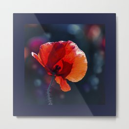 Red poppy on blue background Metal Print