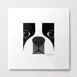 Boston Terrier Close Up Metal Print