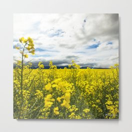 Fields of yellow - Floral Photography #Society6 Metal Print