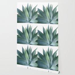 Agave blanco Wallpaper