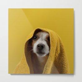 Jack Russell Terrier 8 Metal Print