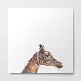 giraffe - animalis - nature Metal Print