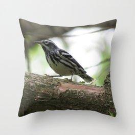 Black and White Warbler at Eagle Mountain In Pennsylvania Throw Pillow