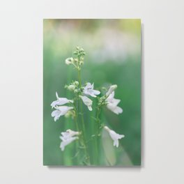 White and Green - Wildflower Photography Metal Print