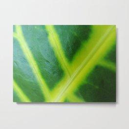 Blown up Leaf Metal Print