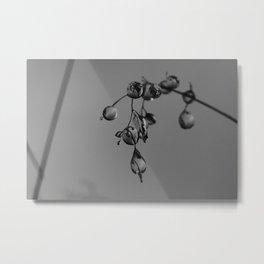 Exmoor IV Metal Print
