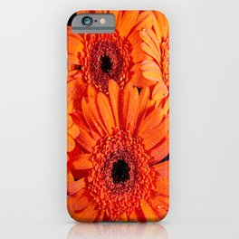 Orange Gerber Daisies iPhone Case
