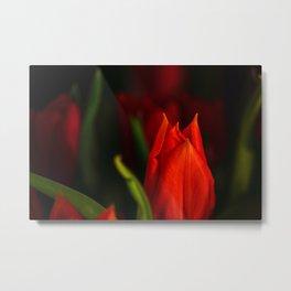Rubeum tulips amoris Metal Print