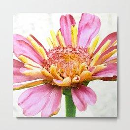 Fine Art Single Pink Zinnia Flower Close-Up Photo Metal Print