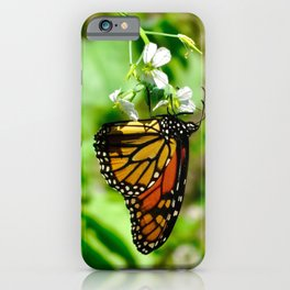 monarch butterfly - increasingly extinct species iPhone Case