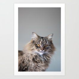 Royal Tom cat : Look into my eyes Art Print