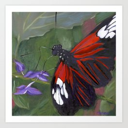 Red and Black Butterfly Art Print
