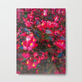 closeup red flowers with yellow pollen and green leaves Metal Print