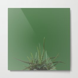 Avocado Aloe Metal Print