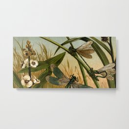 Brehms Thierleben Metal Print