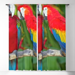 Two Splendid Spectacular Colorful Ara Parrots Flirting Close Up Ultra HD Blackout Curtain