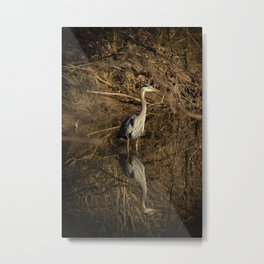 Great Blue Heron - Reflections in a Stream Metal Print