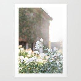 Romantic Rose Garden Art Print