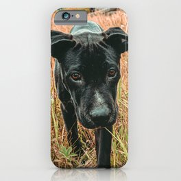 Doggy in the Field // Rust Filter Hiking by Rustic Abandoned Log Cabin Summit Colorado iPhone Case