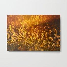 Foxtail Metal Print