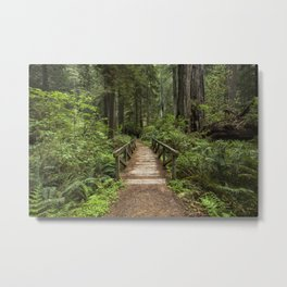 Walk Through Prairie Creek Redwoods State Park Metal Print