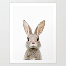 Baby Rabbit Portrait Art Print