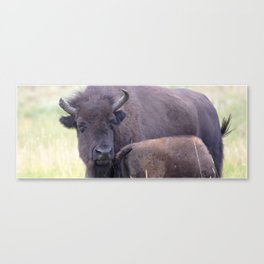 Watercolor Bison Cow and Calf 02, Yellowstone, WY Canvas Print