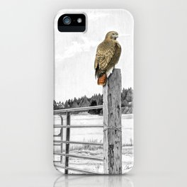 Red tailed hawk on fencepost iPhone Case