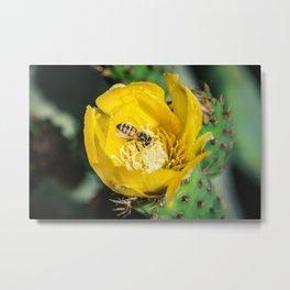 Wasp in Barbary fig flower Metal Print