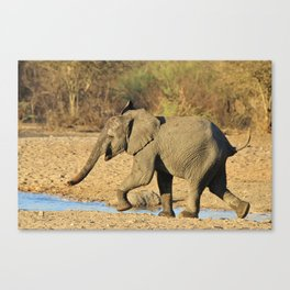 African Elephant - Running Young Canvas Print