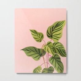 Upstart / Tropical Plant Metal Print