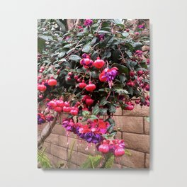 Fuchsia Color Flower Garden Metal Print