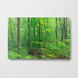 Forest 7 Metal Print