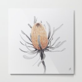 banksia serrata II Metal Print