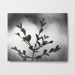 Black and White Nature Botanical Photography, Dark Grey Tree Branch, Neutral Gray Branches Metal Print